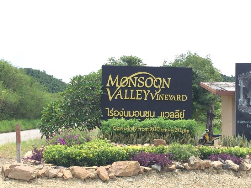 Monsoon Valley vineyard 1