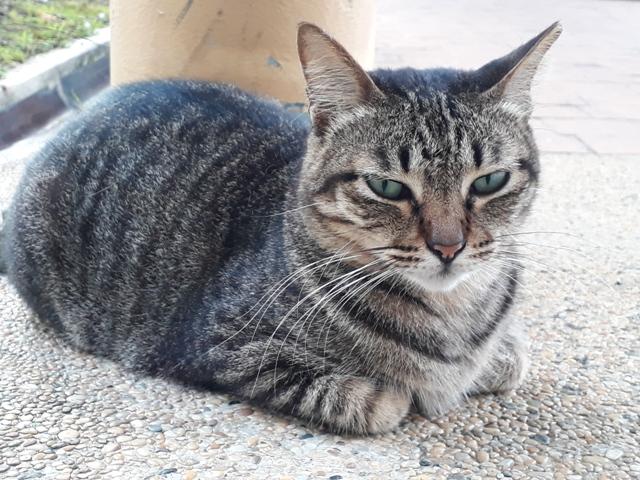 Yishun cat4