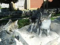 Aphrodias Cat1