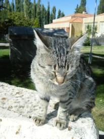 Aphrodias Cat2