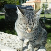 Aphrodias Cat2