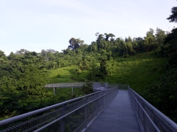 Canopy Forest walk 2