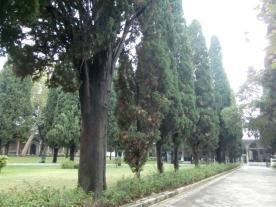 Cypress row