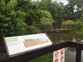 Discovery wetlands9