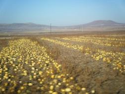 Drive to Kaymakli