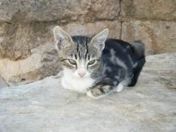 Ephesus cat
