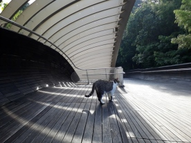 Henderson Waves cat