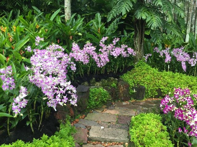 Orchid Garden 1