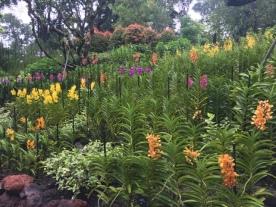 Orchid Garden 5