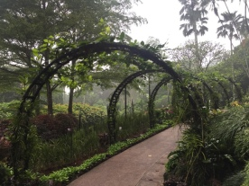 Orchid Garden 9
