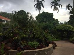 Orchid Garden Burkill Hall 2