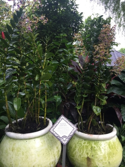 Orchid Garden VIP 3