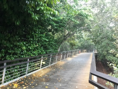 Bukit Chermin Boardwalk 1