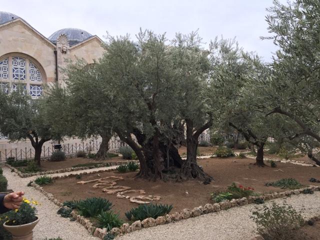 Garden of Gethsemane20