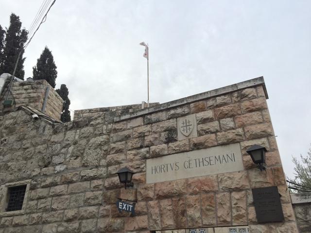 Garden of Gethsemane22