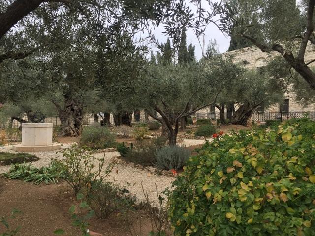 Garden of Gethsemane6