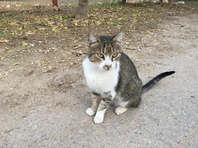 Kibbutz cat 2