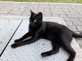 Duxton Plain Park cat