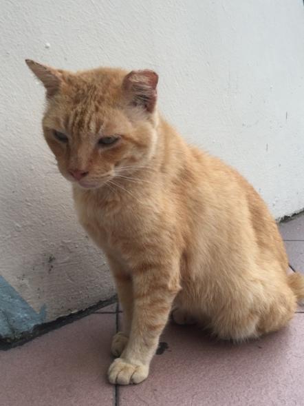 Eunos Cat