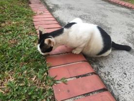Old cat 1