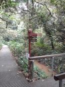 Trail walk to treetop 3