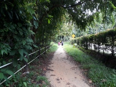 Trail walk to treetop 6