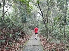 Trail walk to treetop 7