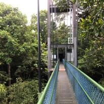 Treetop walk10