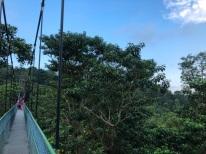 Treetop walk14