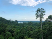 Treetop walk16