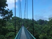Treetop walk7